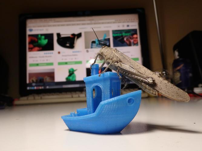 #3DBenchy - The jolly 3D printing torture-test 3D Print 16978