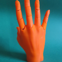 Small Jointed Hand 3D Printing 20656