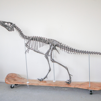 Small Life size baby T-rex skeleton - Part 01/10 3D Printing 34926