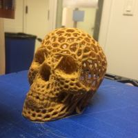 Small Skull lamps - Voronoi Style 3D Printing 5224