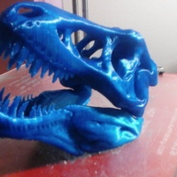 Small The T-Rex Skull 3D Printing 6899
